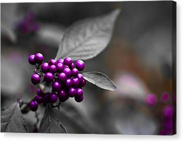 Purple Only Canvas Print