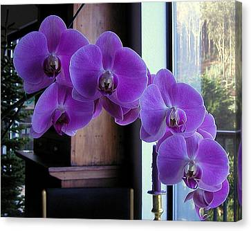 Canvas Print featuring the photograph Purple Orchid by AJ  Schibig