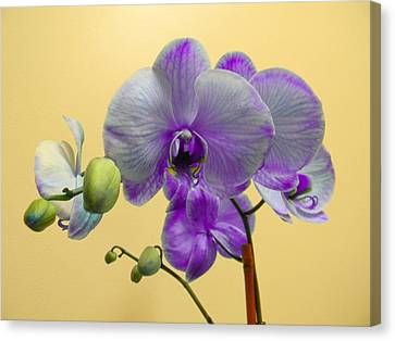 Purple Orchid Canvas Print by Christy Usilton