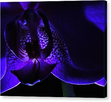 Purple Orchid Canvas Print by Todd Soderstrom