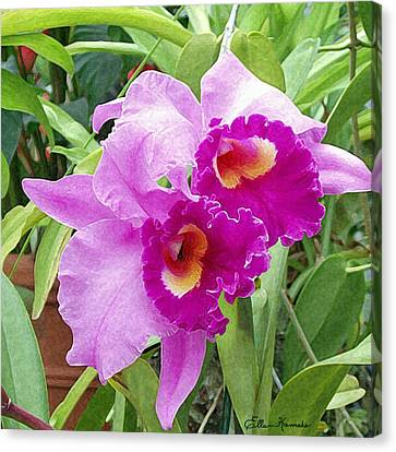 Purple Cattleya Orchids Canvas Print