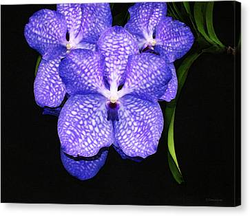 Purple Orchids - Flower Art By Sharon Cummings Canvas Print by Sharon Cummings