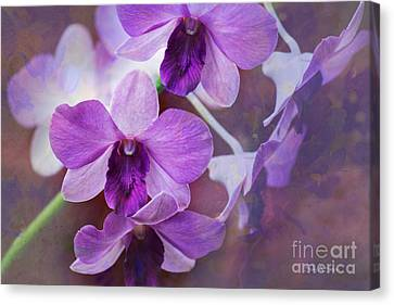 Purple Orchids Canvas Print by Sally Simon