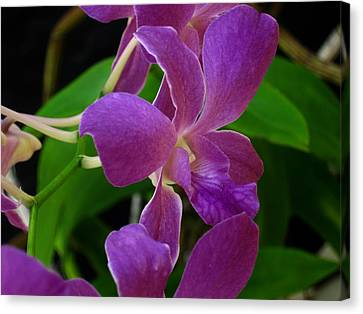 Canvas Print featuring the photograph Purple Over Green by Greg Allore