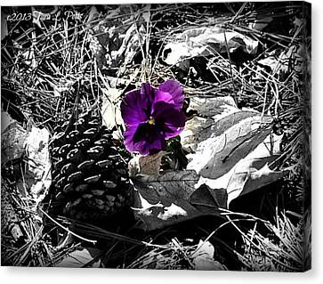 Canvas Print featuring the photograph Purple Pansy by Tara Potts