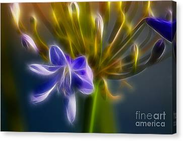 Purple Passion 6318-fractal Canvas Print by Gary Gingrich Galleries