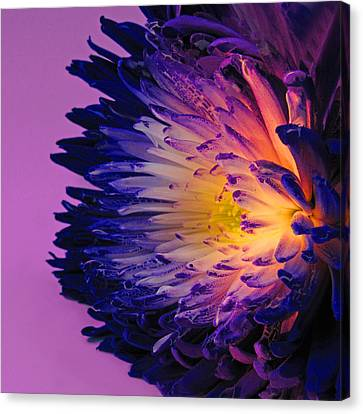 Purple Passion Canvas Print by Don Spenner