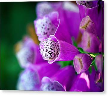 Purple Passion Canvas Print by Tammy Smith