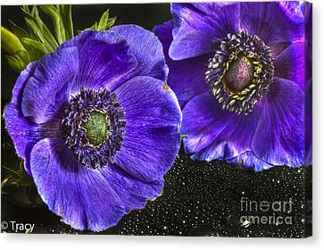 Purple Passion Canvas Print by Tracy  Hall
