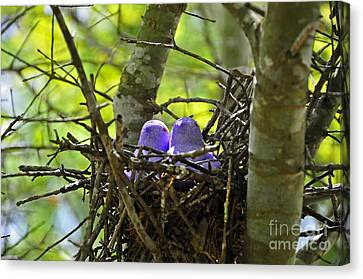 Purple Peeps Pair Canvas Print by Al Powell Photography USA