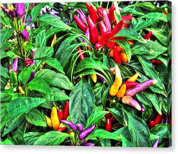 Purple Peppers Canvas Print by Lanita Williams