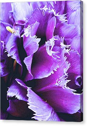 Purple Perfection Canvas Print by Nadalyn Larsen