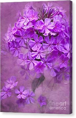 Purple Phlox Canvas Print by Lena Auxier