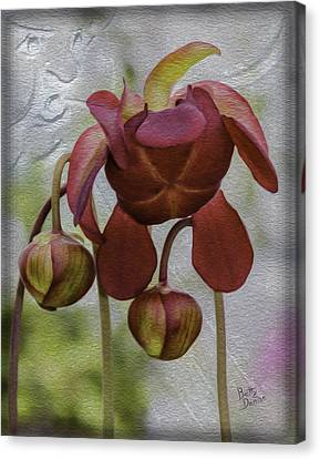 Canvas Print featuring the photograph Purple Pitcher Plant by Betty Denise