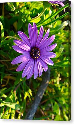 Purple Pleasure Canvas Print