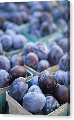 Purple Plums Canvas Print by Rebecca Cozart