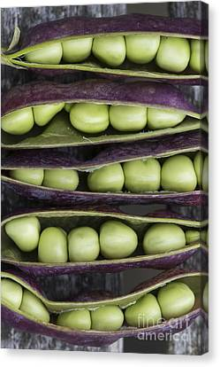 Purple Podded Pea Pattern Canvas Print by Tim Gainey