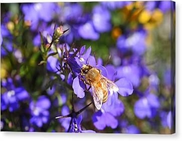 Purple Pollination  Canvas Print by Crystal Hoeveler