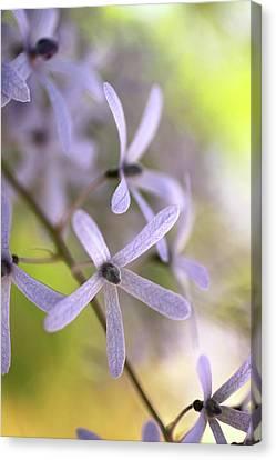 Canvas Print - Purple Rain by AR Annahita
