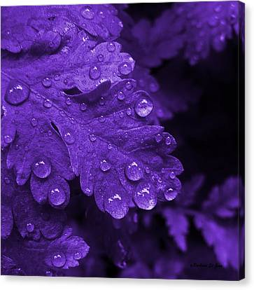 Purple Rain Canvas Print by Barbara St Jean