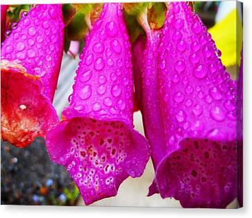 Canvas Print featuring the photograph Purple Rain  by Karen Horn