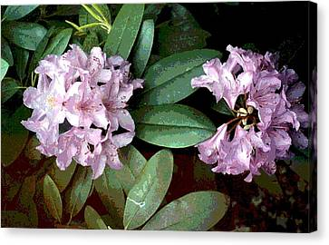 Purple Rhododendron Canvas Print