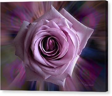 Purple Rose Canvas Print by Thomas Woolworth
