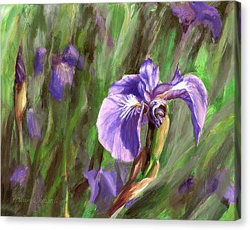 Purple Royalty Wild Iris Canvas Print by Karen Whitworth