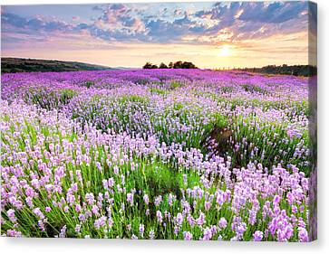 Purple Sea Canvas Print by Evgeni Dinev