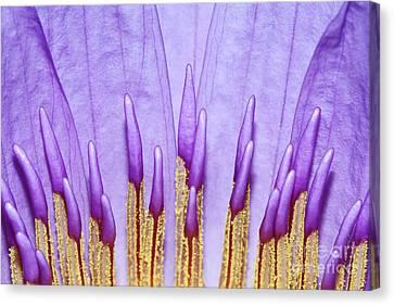 Purple Spires Canvas Print by Judy Whitton