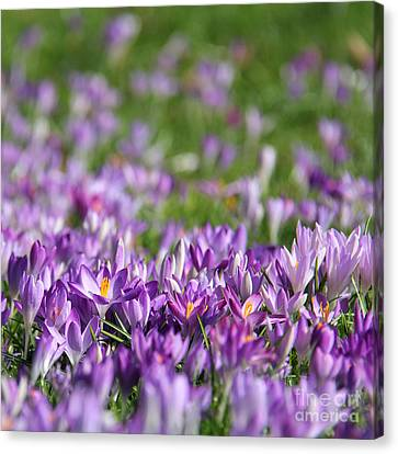 Purple Spring Canvas Print by Karin Ubeleis-Jones