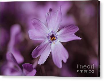 Hannes Cmarits Canvas Print - Purple Star by Hannes Cmarits