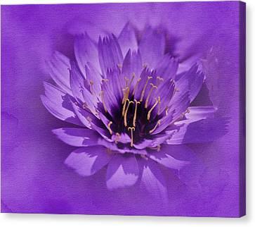 Purple Study Canvas Print