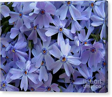 Purple Sunshine Canvas Print by Patti Whitten