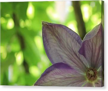Purple Canvas Print by Thomas Leon