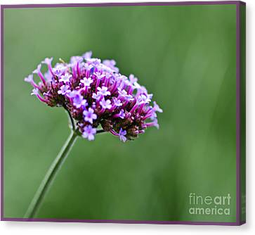 Canvas Print featuring the photograph Purple Top Flower by Maria Janicki
