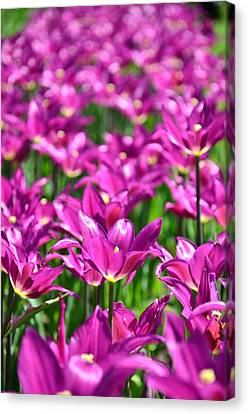 Purple Tulips Canvas Print by Gynt