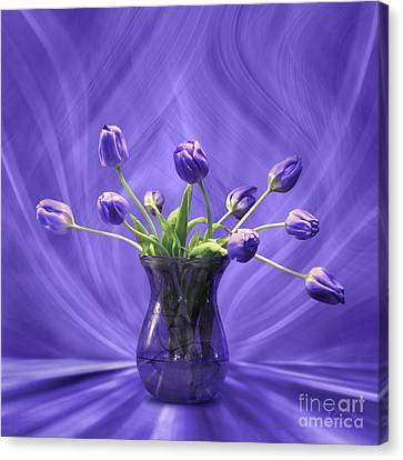 Purple Tulips In Purple Room Canvas Print