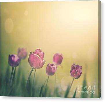 Purple Tulips Canvas Print by Mythja  Photography