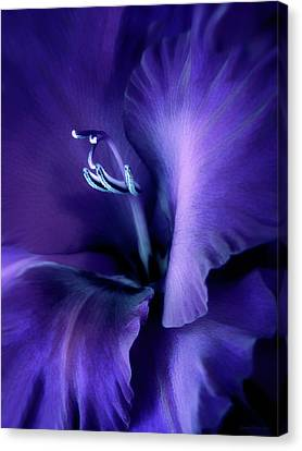 Purple Velvet Gladiolus Flower Canvas Print