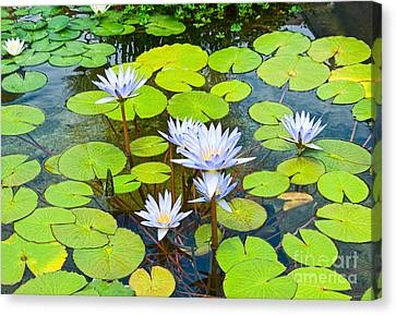 Purple Water Lilies In A Pond. Canvas Print by Jamie Pham