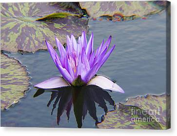 Purple Water Lily With Lily Pads One Canvas Print