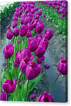 Purplepassion Canvas Print by John Bushnell