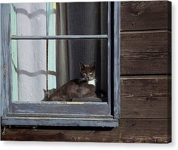 Purrfect Canvas Print by Kathy Bassett