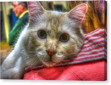 Canvas Print featuring the photograph Purrfect Companion by Dennis Baswell