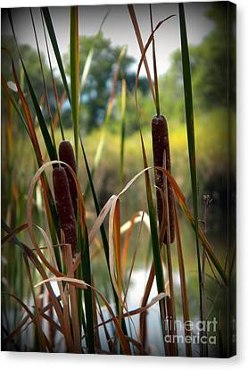 Fountain Creek Nature Center Canvas Print - Pussy Willows by Michelle Frizzell-Thompson