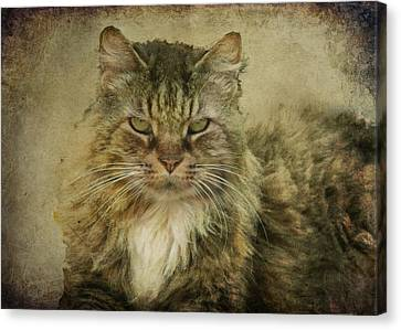 Putz Canvas Print by Susan Kimball
