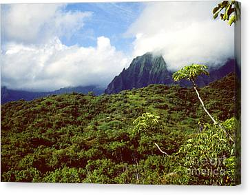Puu Piei Trail Koolau Mountains Canvas Print by Thomas R Fletcher