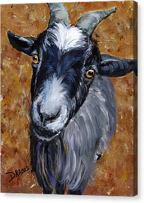 Pygmy Goat Looking Up Canvas Print by Dottie Dracos
