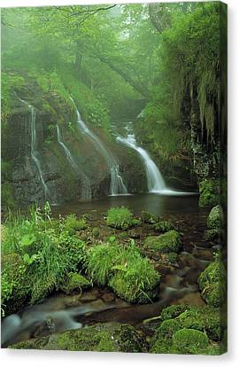 Pyrenees Stream France Canvas Print by Panoramic Images